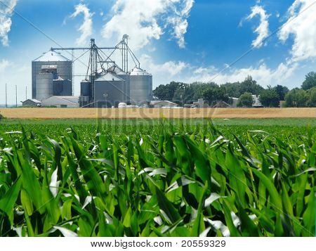 Grain Bins and Corn Field