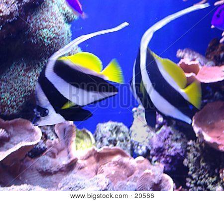 Fishy's