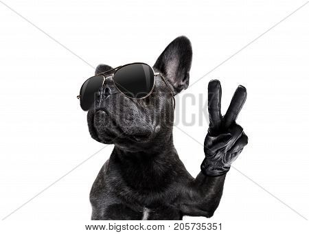 Posing Dog With Sunglasses And