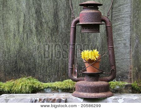 Flower in the Lantern