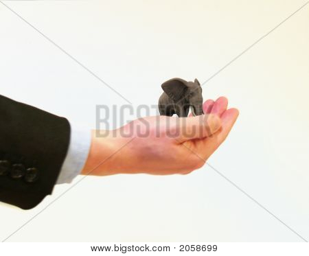 Holding Elephant