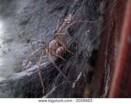 Spider_04