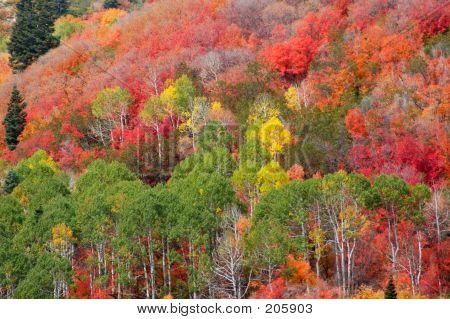 Mountain Fall Colors