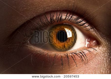 Deep brown human eye.