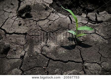 Green plant growing from cracked earth
