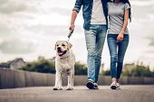Couple On A Walk With Dog poster