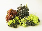 Juicy Grapes Or A Frame With Grape On The White poster