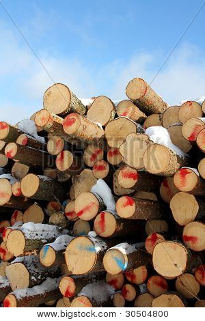 Cut Softwood Logs and Blue Sky