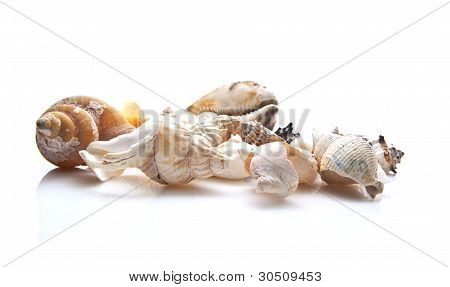Assorted Sea Shells On White Background