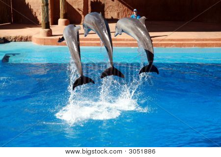 Three Dolphin Jumping
