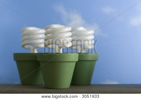 Three Cfl Sprout Pots