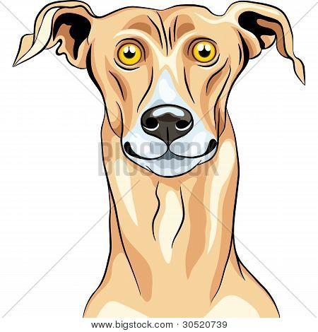 Vector Greyhound Dog Breed Smile