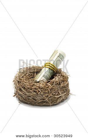 Money Roll In Nest On White