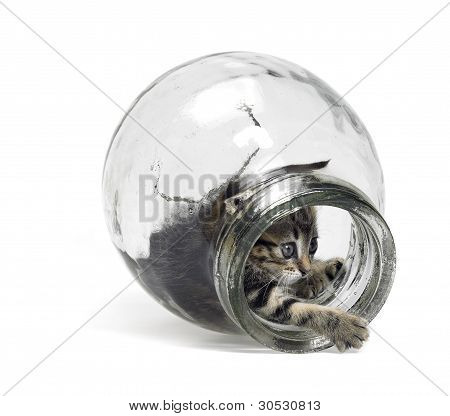 Kitten Playing In Glass Bottle