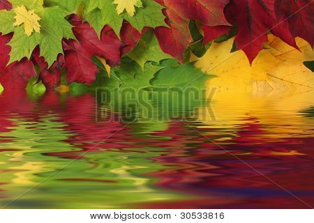 Autumn leaves in water with reflection