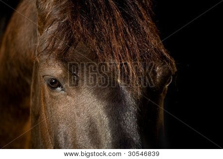 Arabian horse head isolated on black background