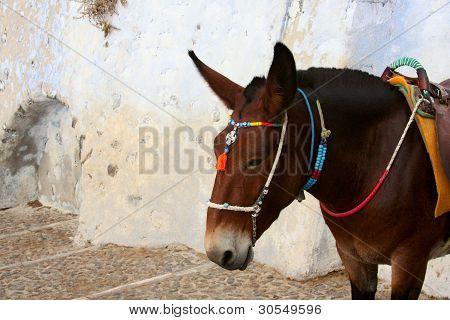Donkey In Old Mediterranean City