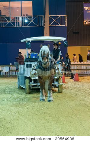 Paris - February 26: Workhorse Competition At The Paris International Agricultural Show 2012 On Febr