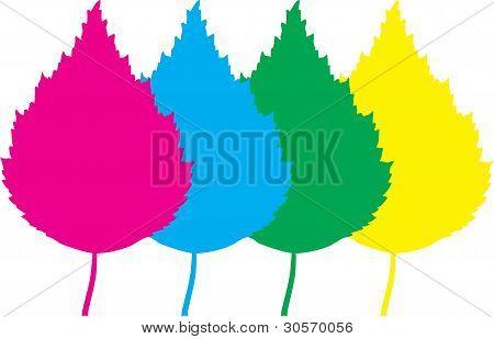 Vector Color Leaf Birch