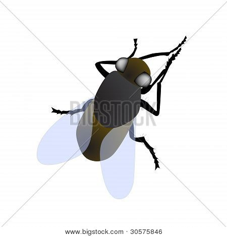 fly isolated vector