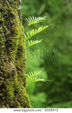 Nurseling Fern Leaves