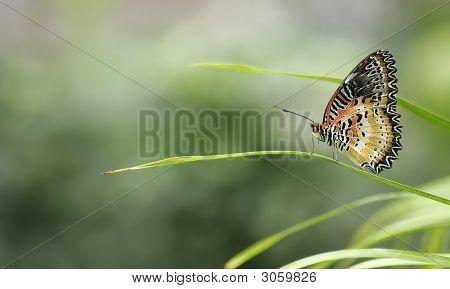 Delicate Butterfly