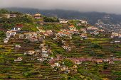 Group Of Houses On Terraced Terrain In Madeira, Portugal poster