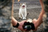 A Man Photographs A Yawning Cat. Creative Perspective Backstage Shooting Kitty. poster