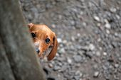 Dachshund Puppy Kennel Stone Background Day Light poster