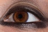 Brown-eyed Girl. Brown Eye Close Up. Eye With Applied Makeup. Eye Of The Girl Close Up. poster