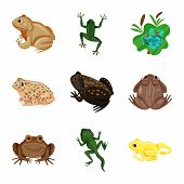 Vector Illustration Of Frog And Anuran Icon. Collection Of Frog And Animal Vector Icon For Stock. poster
