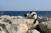 Black And White Stray Cat Eating Dry Food On A White Rock In Front Of The Blue Sea poster