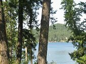picture of loon  - vacation at loon lake in the summer time - JPG