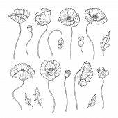 Poppy. Sketch Poppies Ornament Decor Wall Artwork Decorative Plant Poppy Flower Bud Planting Wallpap poster