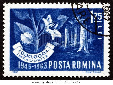 Postage stamp Romania 1963 Beech Forest and Branch