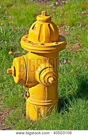 Closeup Of Yellow Fire Hydrant In Grass