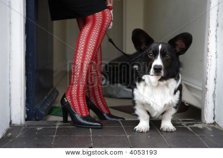 Dog On Leash Beside Woman'S Legs