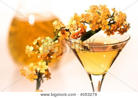 Euphorbia And Cocktail