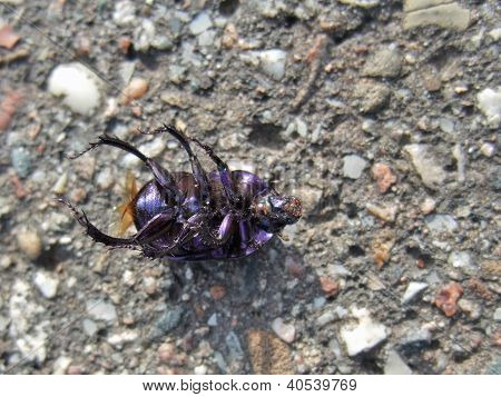 Dead Bug Supine On Pavement