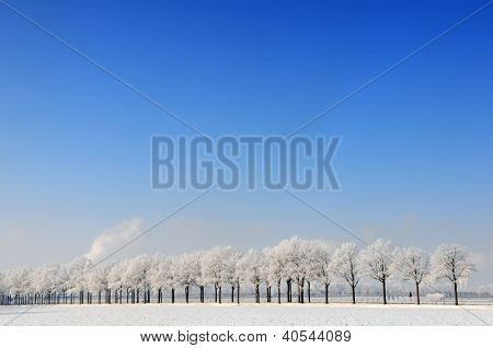 Snowy winter landscape with row of trees in Holland