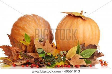 Two ripe orange pumpkins with yellow autumn leaves isolated on white
