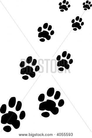 Paw And Foot