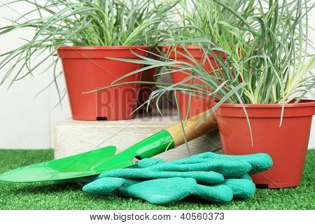 pots with seedling on green grass on wooden background