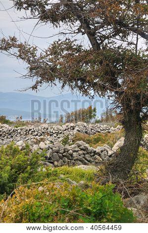 Pastures drystone walls near Rudine Krk island Croatia