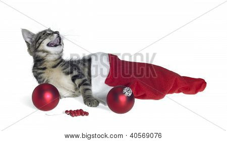 Christmas Cat In Red Jelly Bag Cap