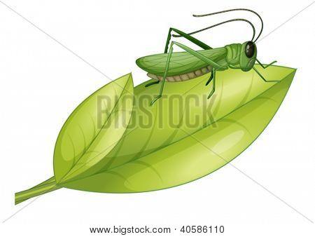 Illustration of a grasshopper on a leaf on a white background