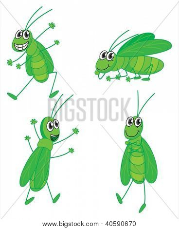 Illustration of four grasshoppers on a white background