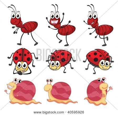 Illustration of a snail, a ladybug and an ant on a white background