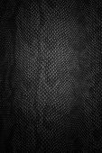 stock photo of lizard skin  - snake skin black texture for a background - JPG