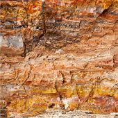Closeup of petrified wood found in the Utah and Arizona regions of America